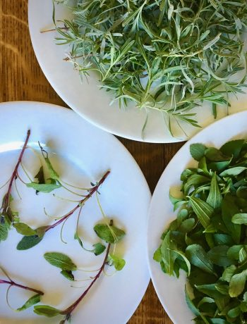sage, lavender and stevia dry on dinner plates on a wood table