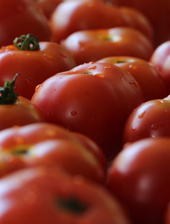 uncut ripe red tomatoes glisten with water droplets